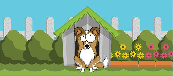 לכלבים אוכל וציוד | אוכל לכלבים זוסטור מובייל